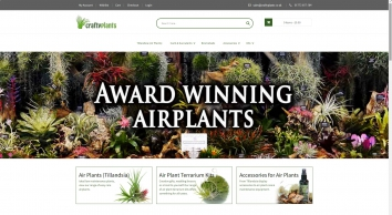 Buy Air Plants Online | Tillandsia For Sale UK | Craftyplants UK