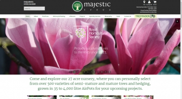 Majestic Trees - High Quality Mature & Semi Mature Trees for Sale