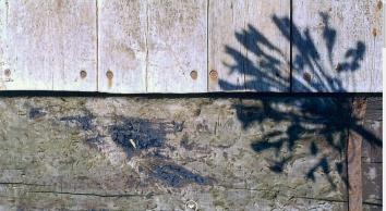 Mike Bayon Garden Design