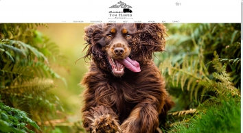 Dog Photographer Pontypool | South Wales | Tom Harper Photography